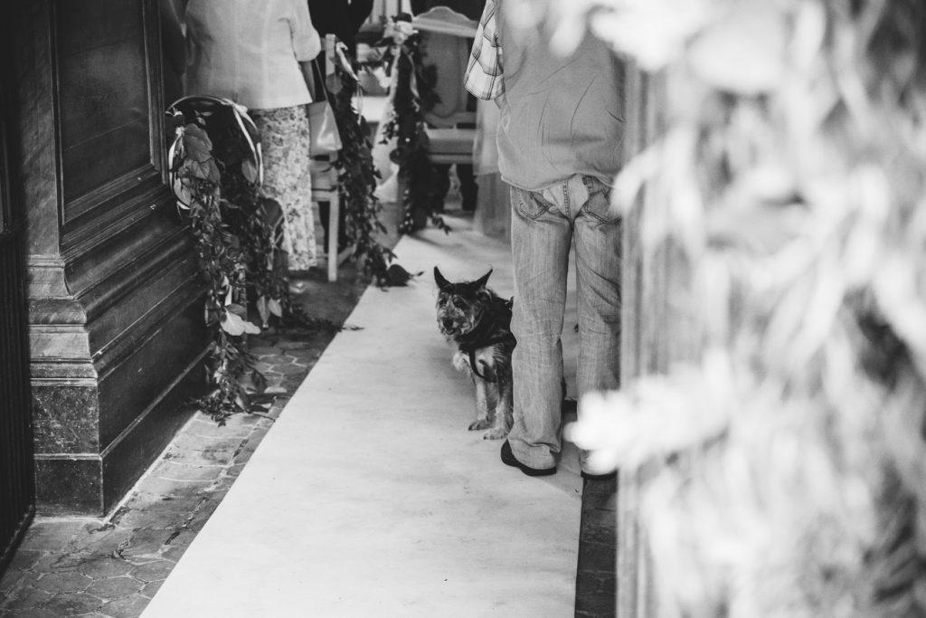Pies na ceremonii ślubnej w kapliczce w Wąsowie