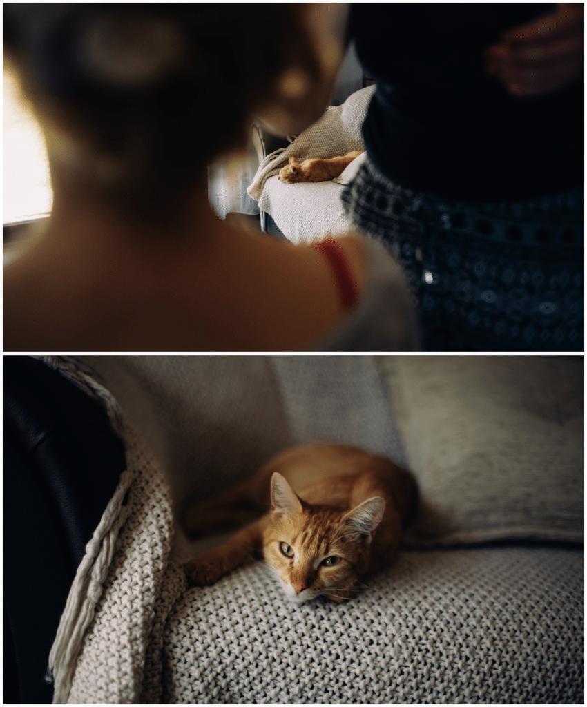 Photo of a cat during preparation. Wedding photo. Nowy Tomyśl Wąsowo