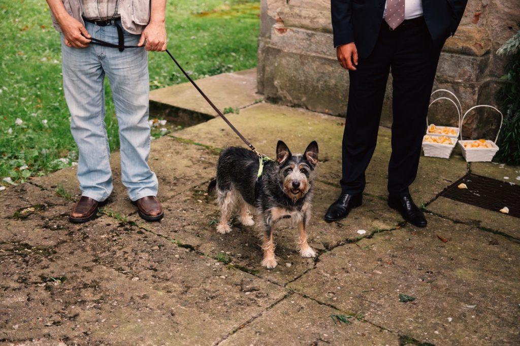 pies na ślube fotografia ślubna poznań